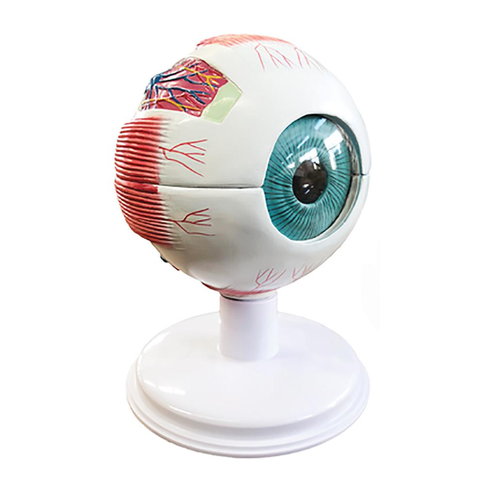 Large Eye Model