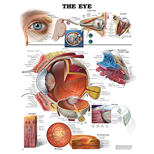 Related Product: Poster: The Eye